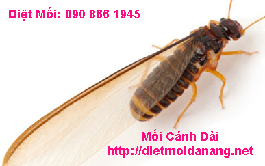 diet moi canh